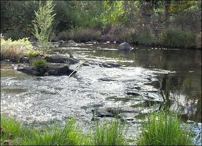 The Yarra River, near Warburton