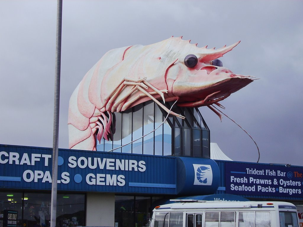 You would not want to meet Big Prawn on a dark sea floor. Big prawn in Ballina, New South Wales. Species uncertain. Picture by user Happy Little Nomad on Flickr.