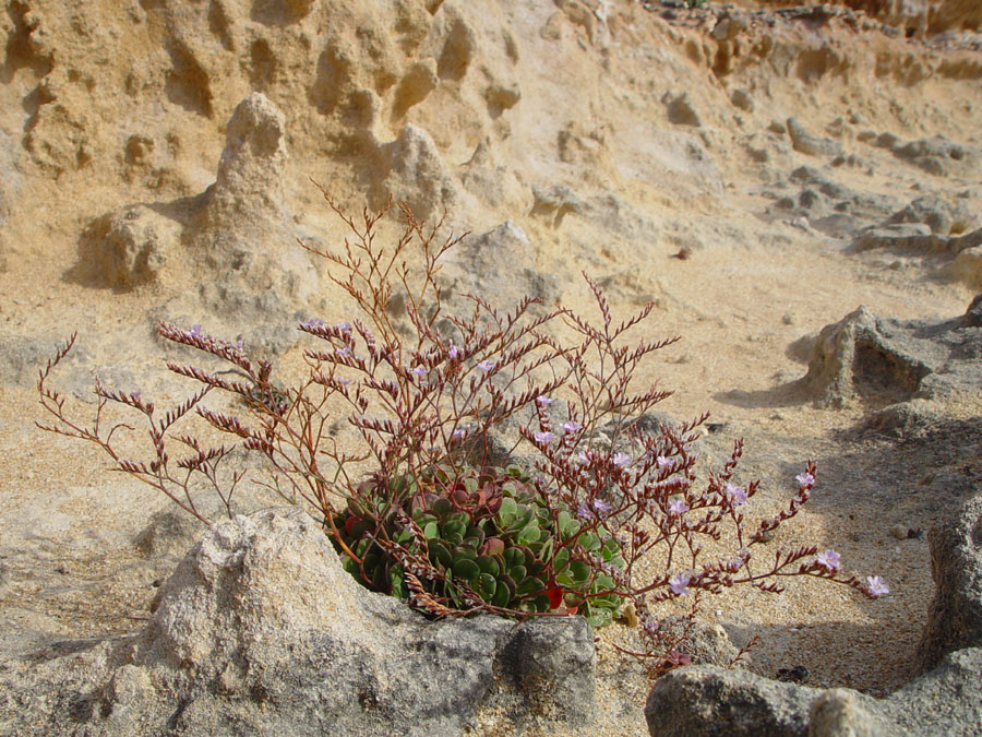 Plants growing in rocks and sand, South Australia