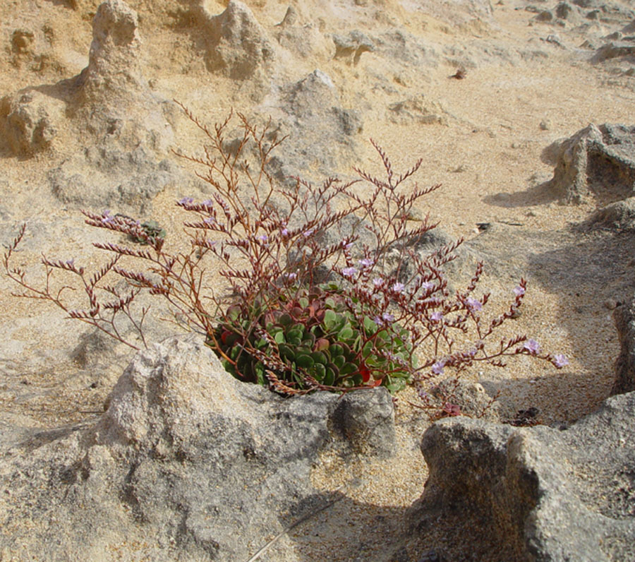 Plants growing in rocks and sand, South Australia (2)
