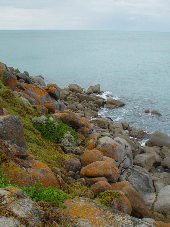 Lichen rocks at Granite Island, Fleurieu Peninsula, SA