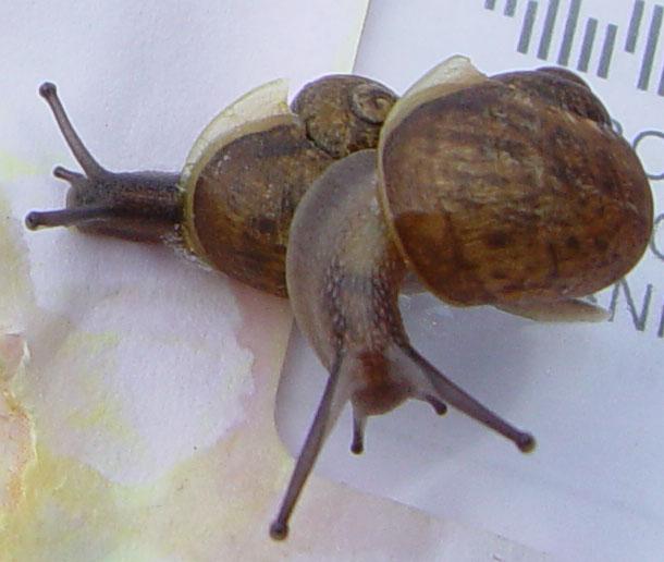 snail-mail-2