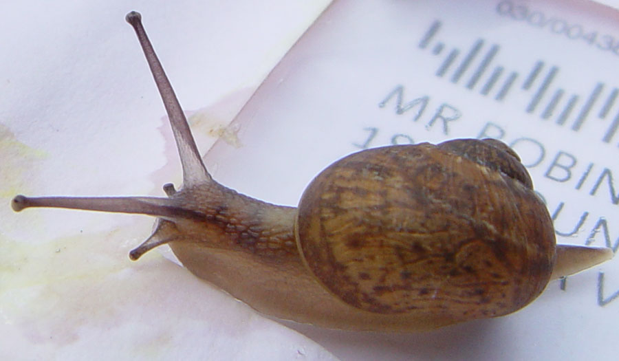 snail-mail-3