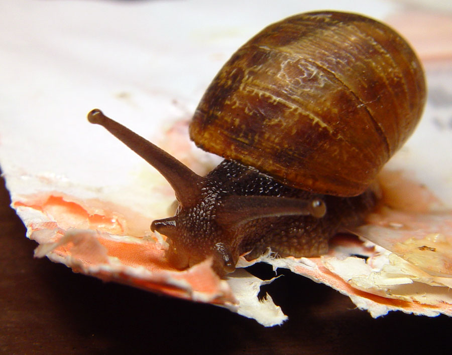 snail-mail-4